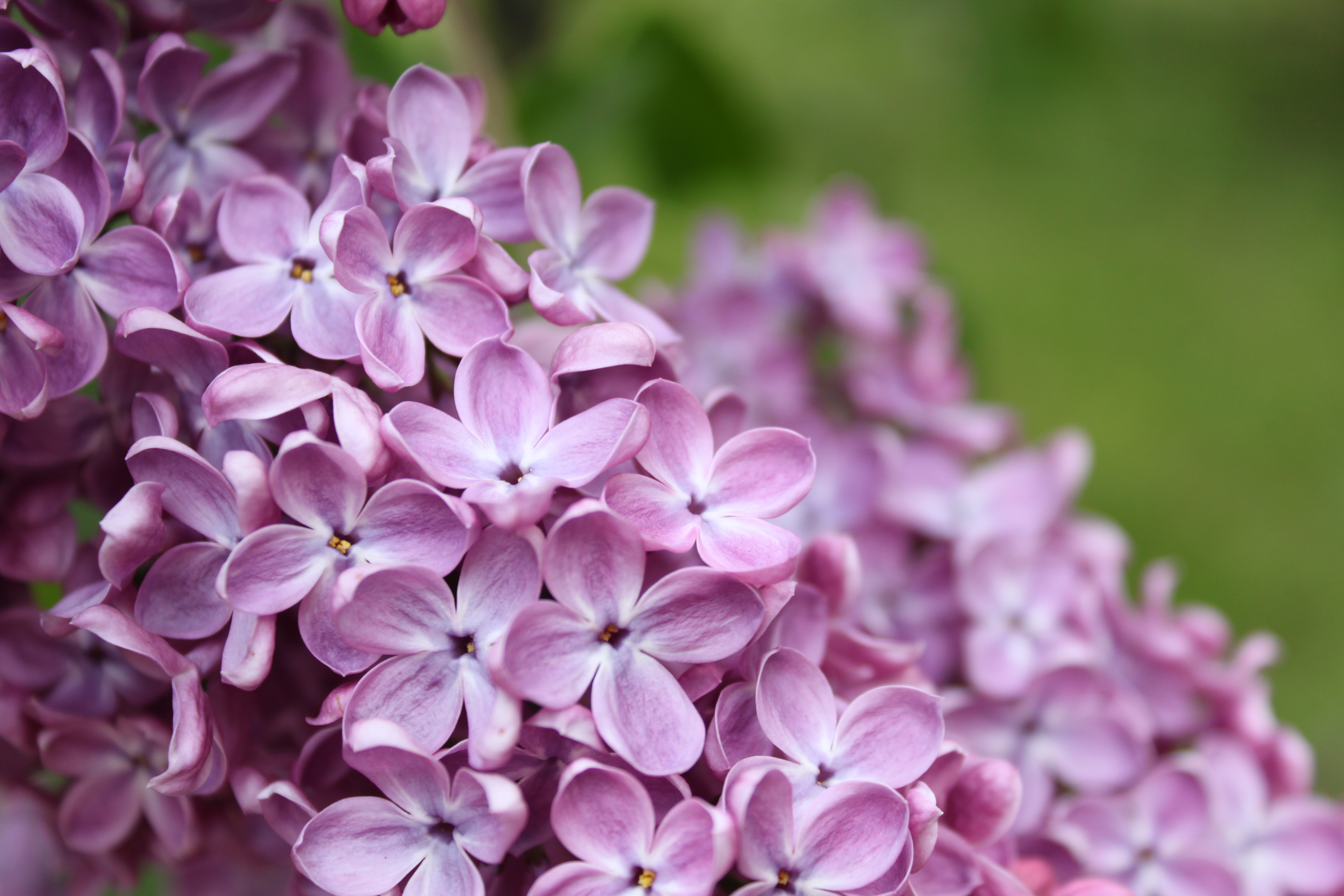 Flower time~Lilac (1) – World Inspires You Create