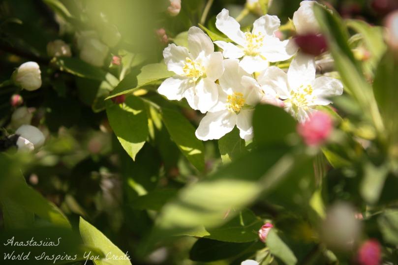 blog flower macro photo