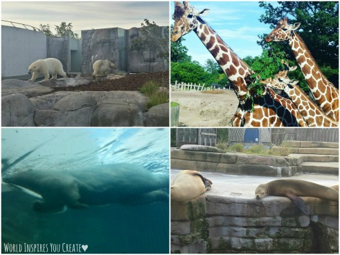 zoo blog